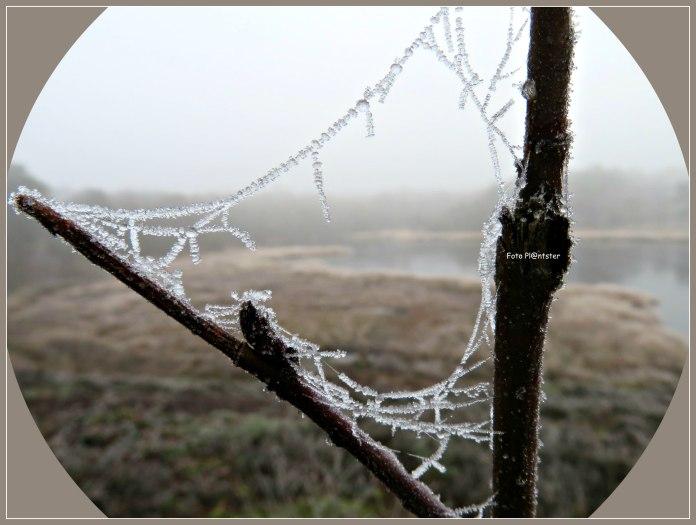 Het oog op winterse kristalletjes