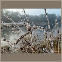 Wintertafereeltje 1-1-2020 bij de Vennen