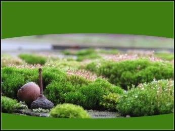 De aangroei van mos ontstaat door de combinatie van veel regen en weinig zon.
