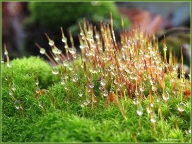 Hoe mooi kunnen regendruppels ook zijn ...,met tegenlicht