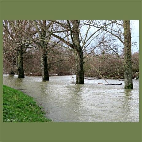 De bomen in het water ... zij kunnen niet er onderuit ,dus staan ze in deze natte periode erin