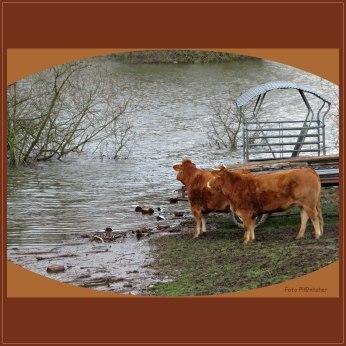 Met een overstroming ... meer water doet stromen