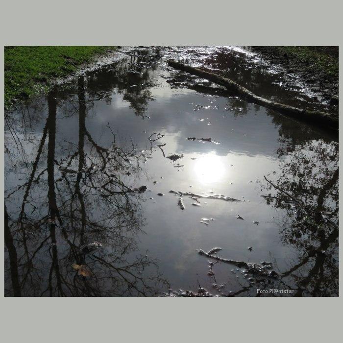 IMG_3874 Zon in regenplas gevangen