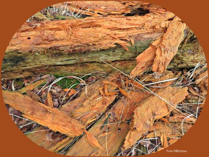 Het hout aan vezels valt uiteen