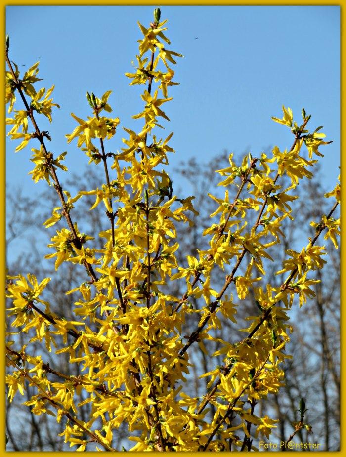 IMG_7520 Fleurig kleurtje