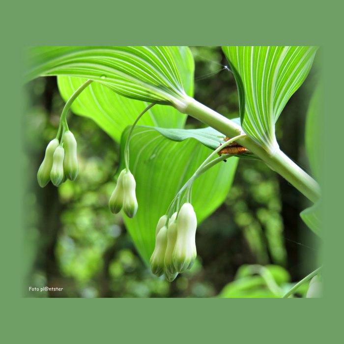 IMG_2865 In het groen