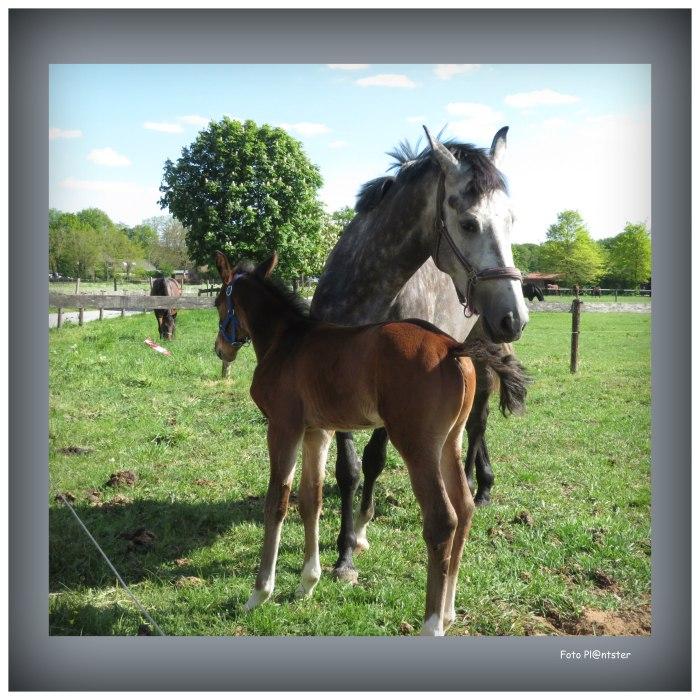 IMG_3658 Paard met veulen