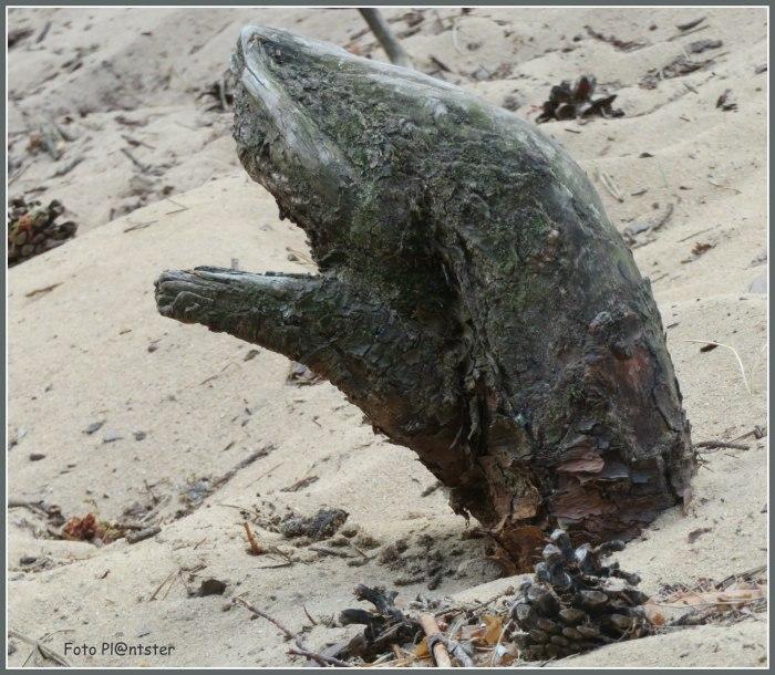 IMG_5589 Houtstronk in het zand