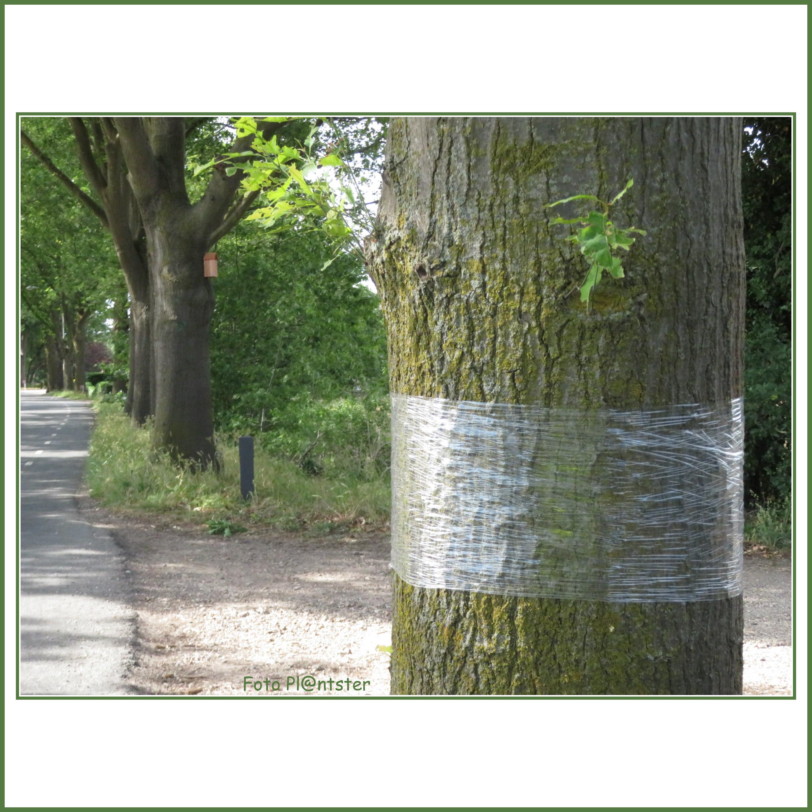 IMG_7972 Plastic aan boom