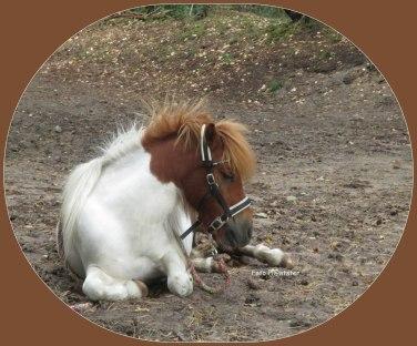 Het was gewoon een aardigheid ... deze pony was van een aardige meid