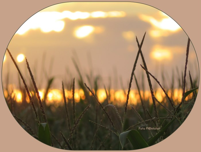 IMG_8670 Zakkende zon