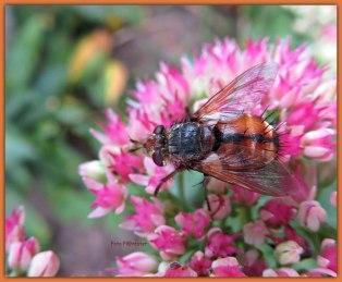 Insect met haar stekels ... van dichtbij ziet het gevaarlijk eruit