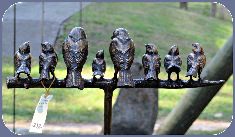 IMG_5809 Mussen op een rij