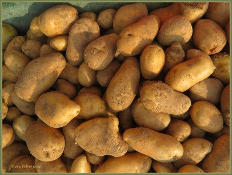 Aardappelen met veel mogelijkheden als voedsel om te koken ,bakken, frituren en pureren