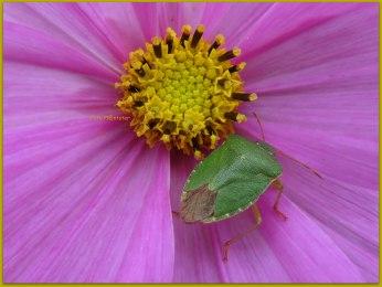 In deze bloem zich stil weten te gedragen