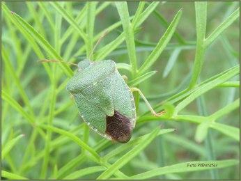 Met wantsensprong ..., zijn groen in het groene gras. Bijna een zoekplaatje :D