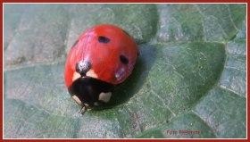 Het lieveheersbeestje ,met wat er in je omgaat een waarom je erbij stil staat