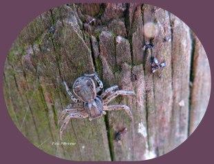 Als doelwit van een andere spin op hoge poten weggekropen