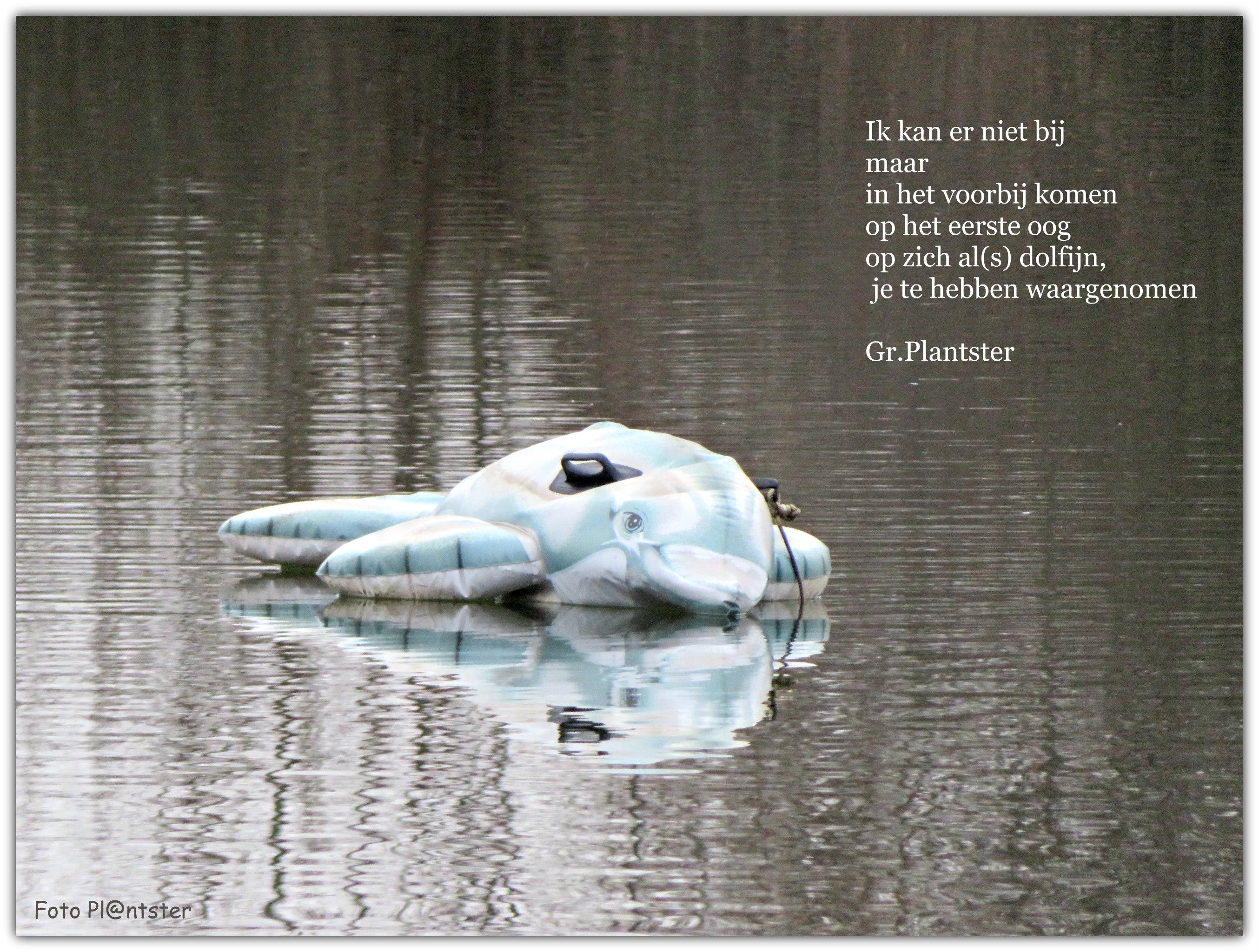 IMG_0028 Dolfijn