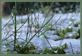 Als sneeuw een laagje voor de zon, gauw deze foto nu het nog kon 'Dauwdruppels'