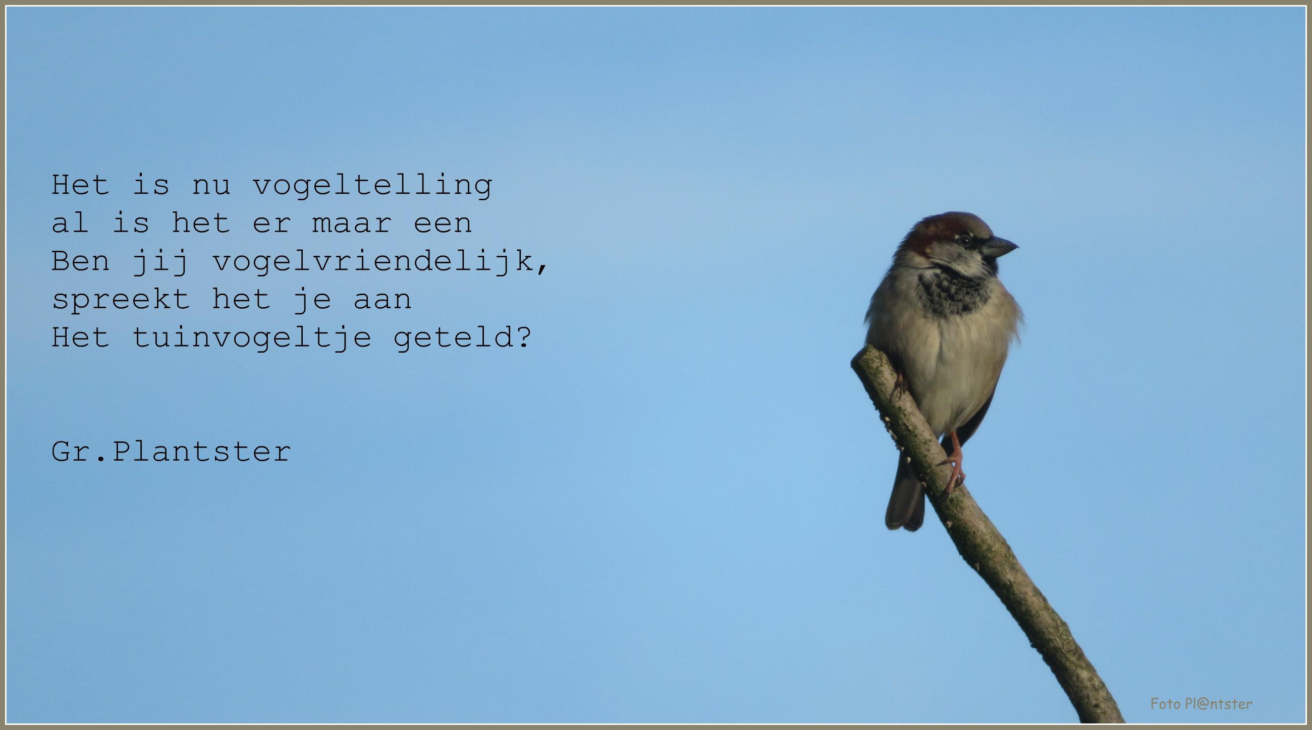 IMG_1633 Tuinvogeltelling