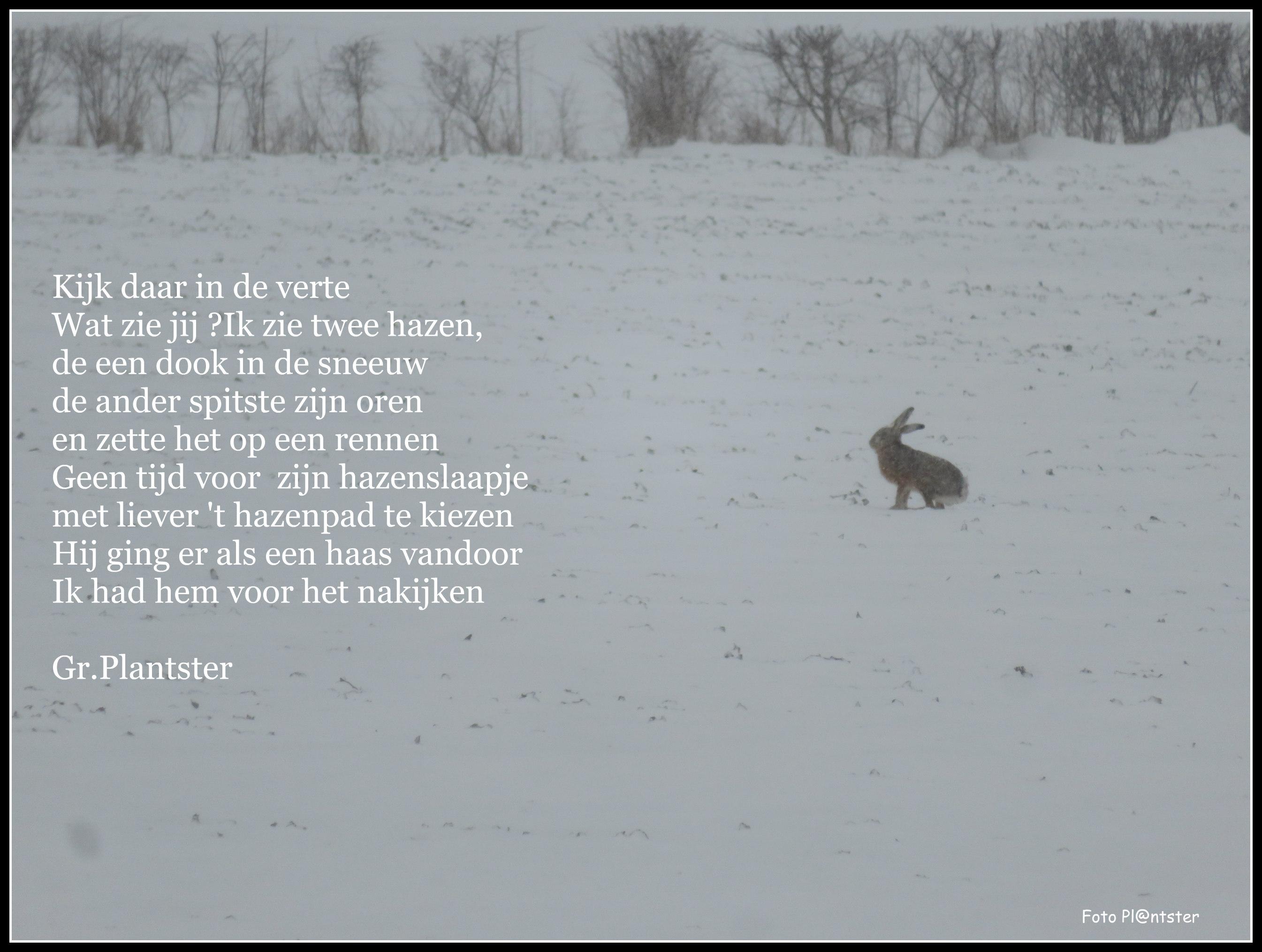 IMG_2099 Winter