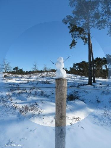 Sneeuwpopje onder de aandacht