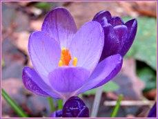 'n Fleurig voorjaarsbloemetje misstaat niet
