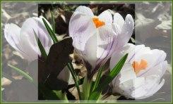 Met het voorjaar voor ons