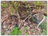 Deze fiets heeft zijn beste tijd gehad ,als roestig blik een charme?