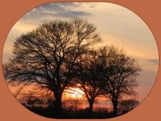 Tussen de bomen door , 'n laatste glimp van de avondzon op te vangen