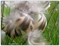 Verenpracht in 't gras , en niet wetend van welk vogeltje dit was. Herken jij deze misschien?
