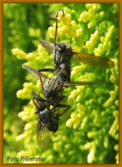 Het mannetje bracht een prooi mee voor het vrouwtje. Viel het vrouwtje nu op de man of op de prooi?? :D