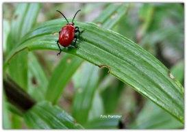 Het rode op het groen :(