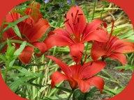 Ondanks 't vraatzuchtige van de rode kever is mooi rood niet lelijk