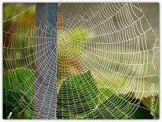 Prachtig geweven web, wat even deed denken aan een gehaakt kleedje