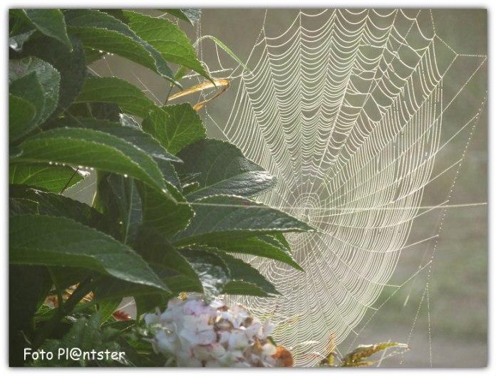 Web in de ochtend