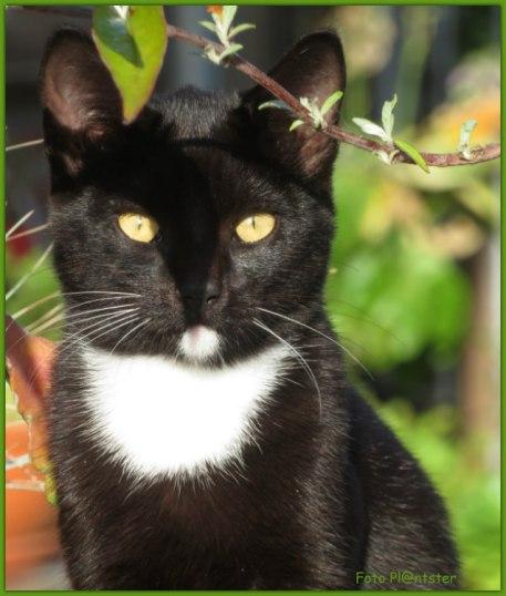 Je houdt van een kat, ik zeg maar wat. Je hebt een voorkeur of niet, ben je wel of niet een katte mens het is maar net hoe je het ziet en waar trek jij die grens.