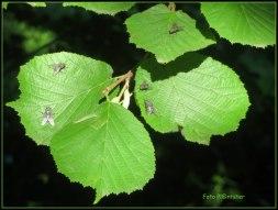 Vliegen vlogen op en af, met op het blad zonnewarmte