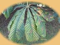 Geleidelijk aan verkleuren de bladeren en uiteindelijk vallen zij ook op de grond