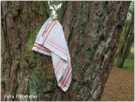 Opvallend ,is het wit van het doekje in een boom