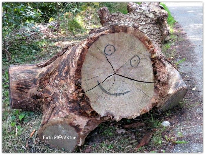 IMG_3656 Een boom